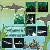 Shark_NC_Aug_2010_p_2_smaller.jpg