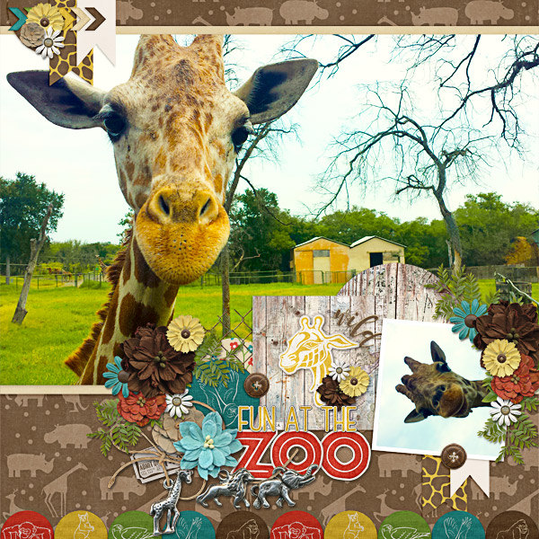 wild giraffes xd