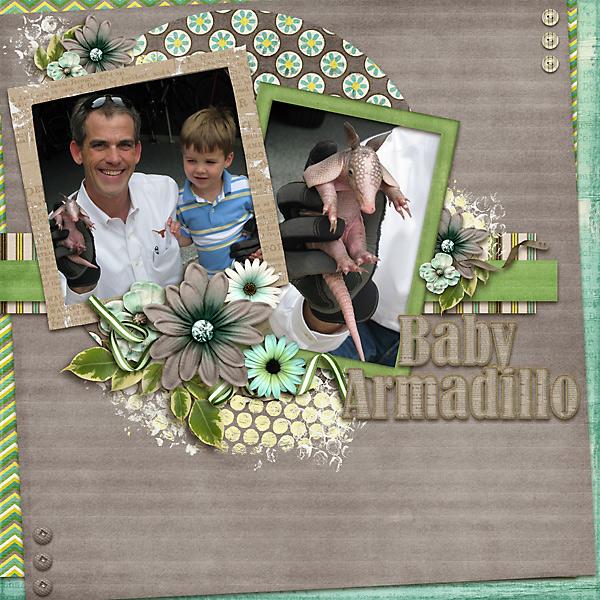 Baby Armadillo