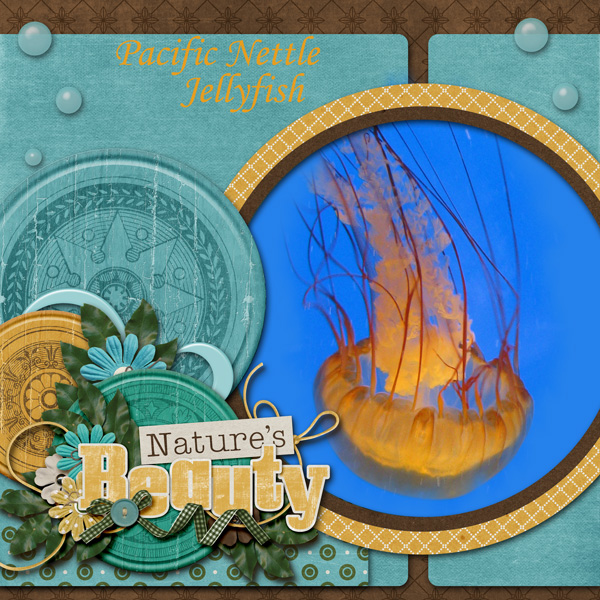 Pacific Nettle Jellyfish