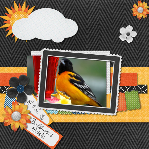 Oriole Migration