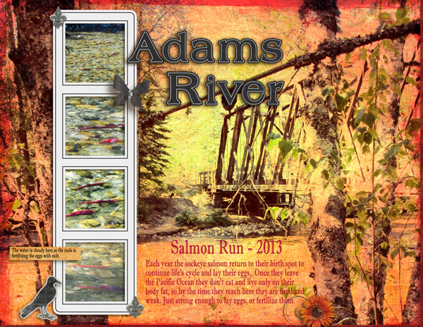 Adams River Salmon Run - pg1