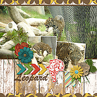 2014-08-02-leopard_sm.jpg