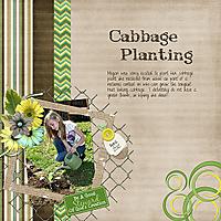 Cabbage-Planting-web.jpg