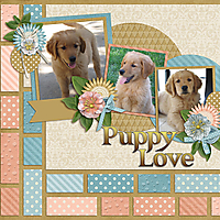 Puppy1web.jpg