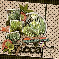 Yucca_copy.jpg