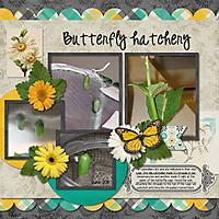 butterfly-hatchery.jpg