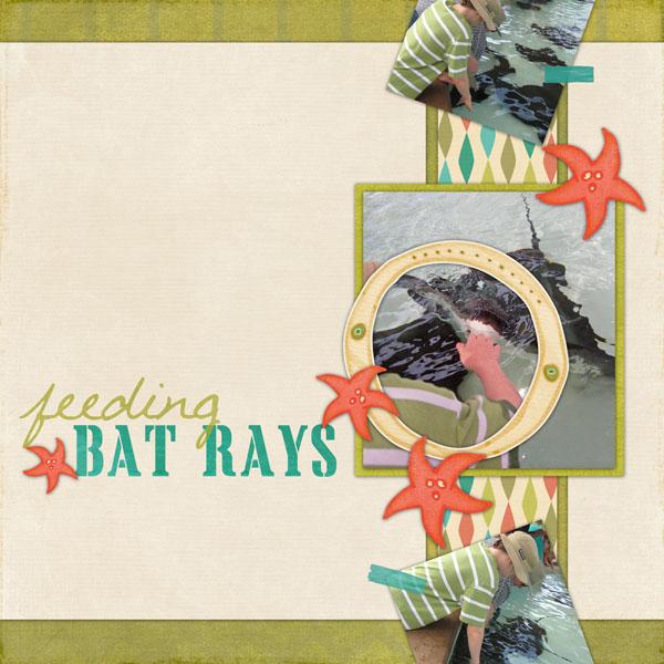 Feeding Bat Rays
