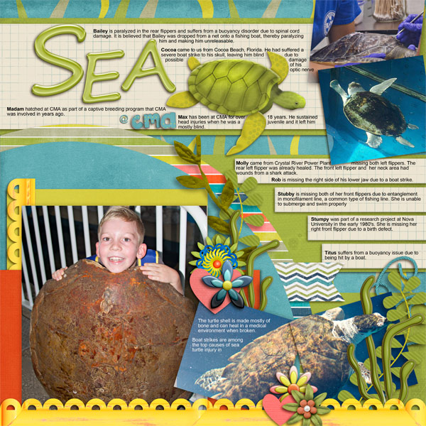 Ben and the Sea Turtles
