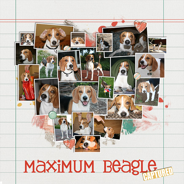 Maximum Beagle