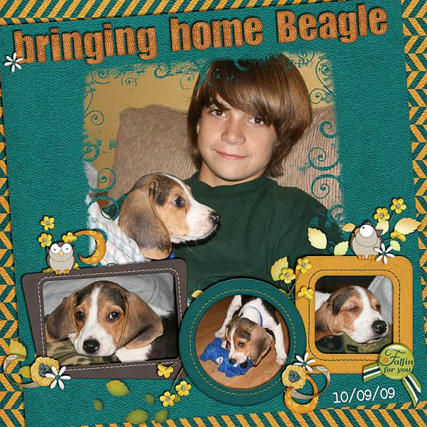 Bringing Home Beagle