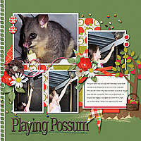 Playing-Possum_webjmb.jpg