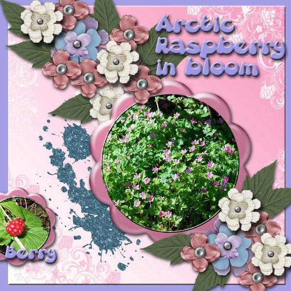 Arctic_raspberry