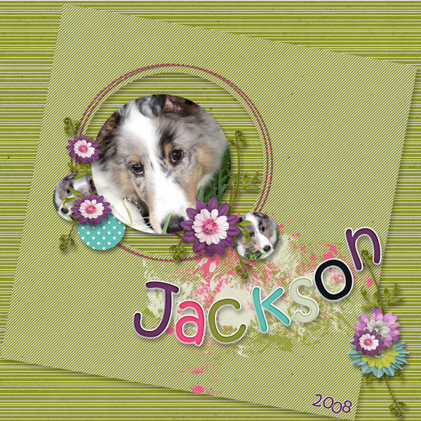 Jackson - 2008