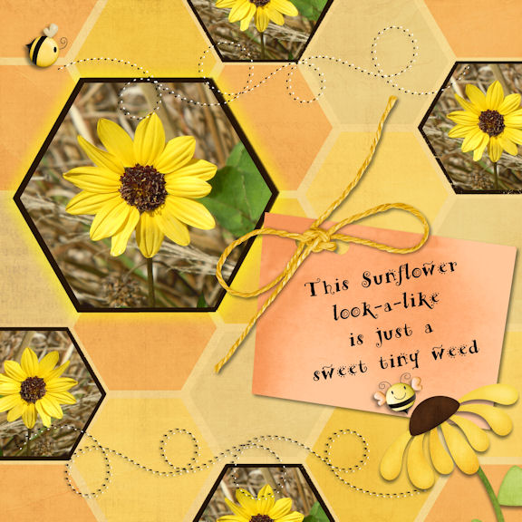 tms_sweet_sunflowers_flower_-_Page_077