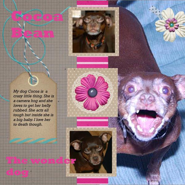 Cocoa Bean the Wonder Dog