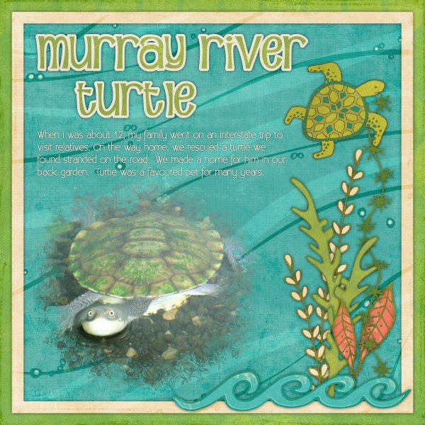 Murray River Turtle