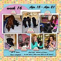 week-16_-2013.jpg