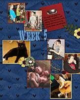 week-53.jpg