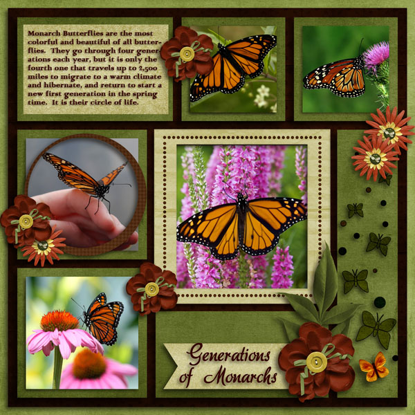 Generations Of Monarchs