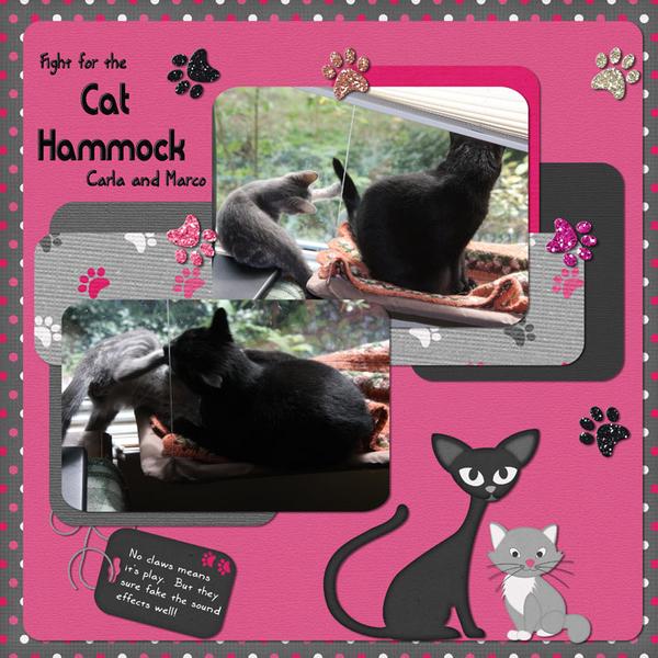 Fight for the Cat Hammock
