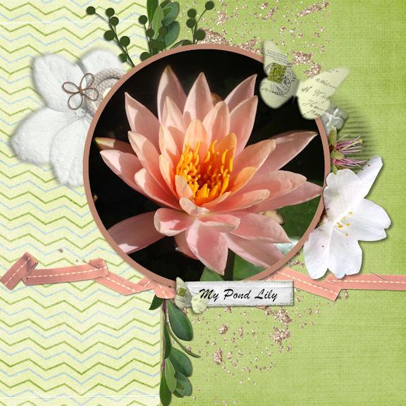 My pond lily
