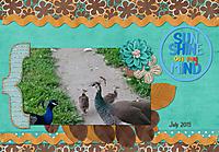 2017July-birds.jpg