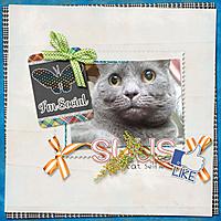 20140331_cat-selfie-web.jpg