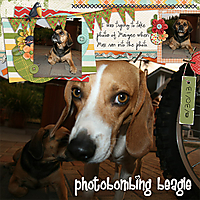 photobombing_beagle_copy.jpg