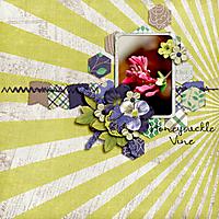 Honeysuckle-Vine.jpg