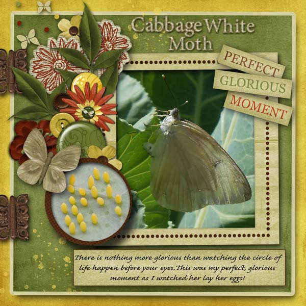 Cabbage White Moth