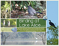 Birding-at-Lake-Alice.jpg