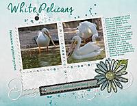 White-Pelicans-GS.jpg