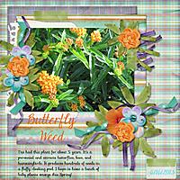 Butterfly_Weed.jpg