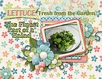Lettuce_600_x_464_.jpg