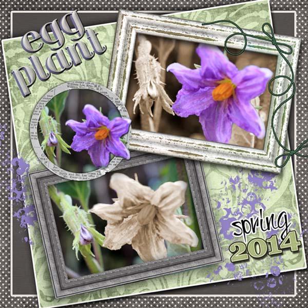 Eggplants Coming