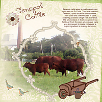 Senepol-Cattle-4web.jpg