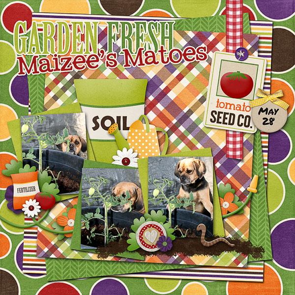 Maizee's Matoes