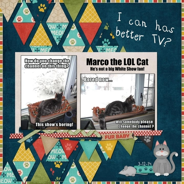 Marco The LOL Cat