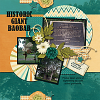 Historic-Baobab-Tree-4GSweb.jpg