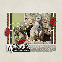Meerkat_temp-chal_GS_WEB.jpg