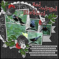 Red_WingedBlackbird.jpg