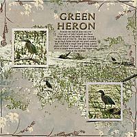 GreenHeron.jpg