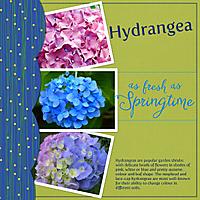 Hydrangea_-_Springtime.jpg