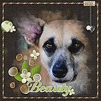 dog-beauty.jpg