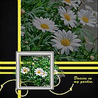 daisies_copy.jpg