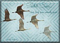 ATC-2016-51---Sandhill-Cranes.jpg