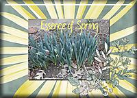 Essence-of-Spring.jpg