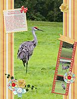 Turkey-Creek-Sandhill-Cranes.jpg