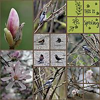 Spring_March2016.jpg